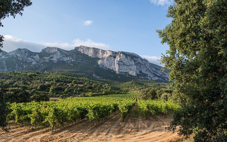 Nuestros viñedos, ubicados en una zona privilegiada.