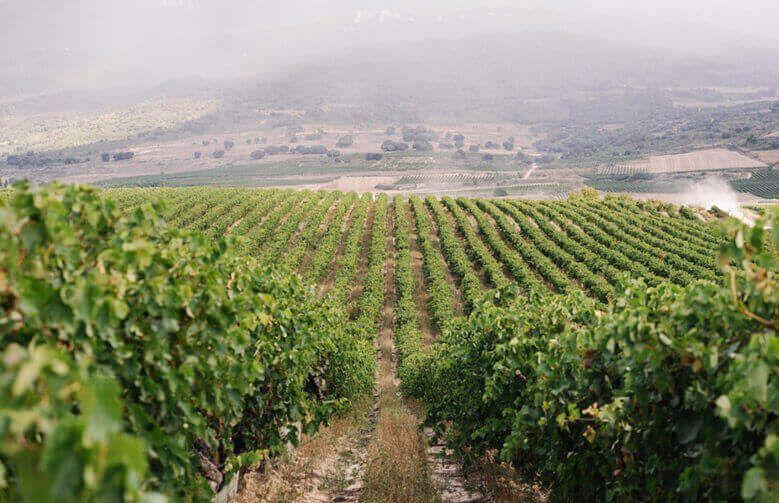 Viñedos en Rioja-Alavesa de Bodegas y Viñedos Pujanza