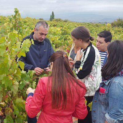 Visita a la bodega y viñedos de Pujanza en Rioja Alavesa